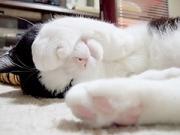 猫ねむりzzz.. Blog編