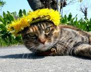 """猫blog """"Howzit〜☆"""""""