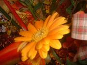 花のように・・・。