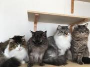 Cat House ビィーナス コロン