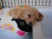 rilog mix犬リンの成長日記。