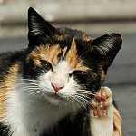 猫学のブログ