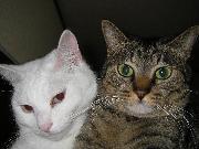 サム&マリンの猫物語