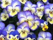 Hiro's Flower