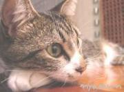 石垣島猫のにゃおくん
