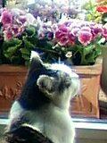 猫花JAZZごよみ
