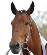 ばん馬のいる風景-BANEI Photo Gallery -