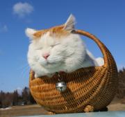 シロ猫さんのプロフィール