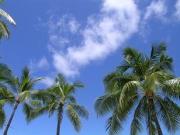 白鳥ちえこの好き好きハワイ!