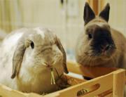 泣いて笑ってウサギ生活♪