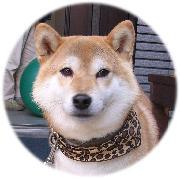 柴犬カイとカイパパのページ
