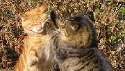 爆笑公園にゃんこ 野良猫 ブログ