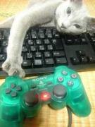 アビシニアン&ロシアンブルー『はちきんの猫ブログ』