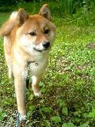 犬好きパティシエ、フランスに行く!!