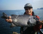 頑張れ!日本海