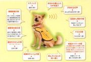 有馬もとの補助犬訓練士日記