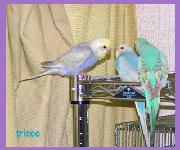 tricoo's blog