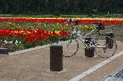 cycling and flowers