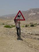 Salut Alger/猫と沙漠とアラブ馬