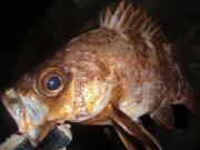 tango eccentrick fisher