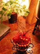 沖縄の花屋♪@浦添