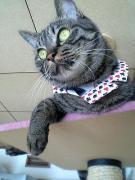 This cat is らっき〜.