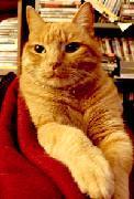 Kitty Forex ::: クレジットカードで外国為替