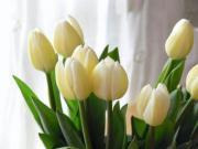 フラワーショップデリカの花日記