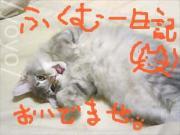 ふくむー日記(猫)
