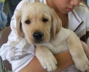 盲導犬応援団の家族日記