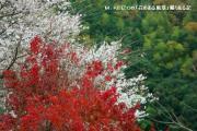 M.KEIZOの「花のある風景」撮りある記