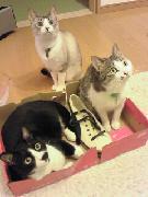 猫家族だにゃ〜♪+わんっ☆