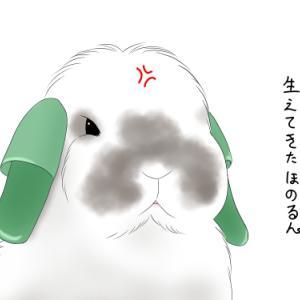 うさぎ♪うちゃぎ♪ぶぅ〜☆彡