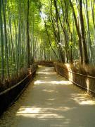 naoのブログ(旧京都の(元)女子大学生によるブログ)