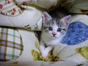 cats:月と三角