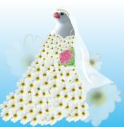 白文鳥キティとベランダ園芸