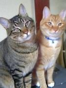 猫のお話・気になる猫用品