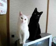 黒猫☆白猫☆
