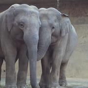 動物園のゾウ・四季のゾウ