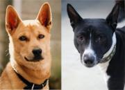 老犬りょうすけと次世代犬アルの観察日記