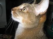 シャルルの猫日記