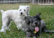 ミックス犬ハナとゴマとおかんのツブヤキ