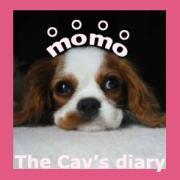 Momo-The Cav's Diary キャバリア ダイアリー