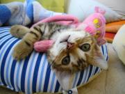GLOOM&羅琉とロイ 〜ビーズと猫の日々〜