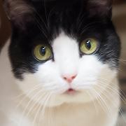 猫ネコ英語