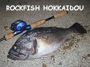 ロックフィッシュ北海道