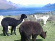 ニュージーランドのクィーンズタウンへようこそ