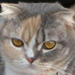 ネコのいる幸せ 〜スコとチンチラ〜