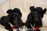 ♪ラッキー&ムービーの今日出来♪