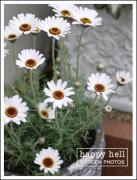 HappyHell
